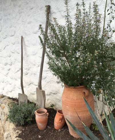 Rosemary and terracotta dreams