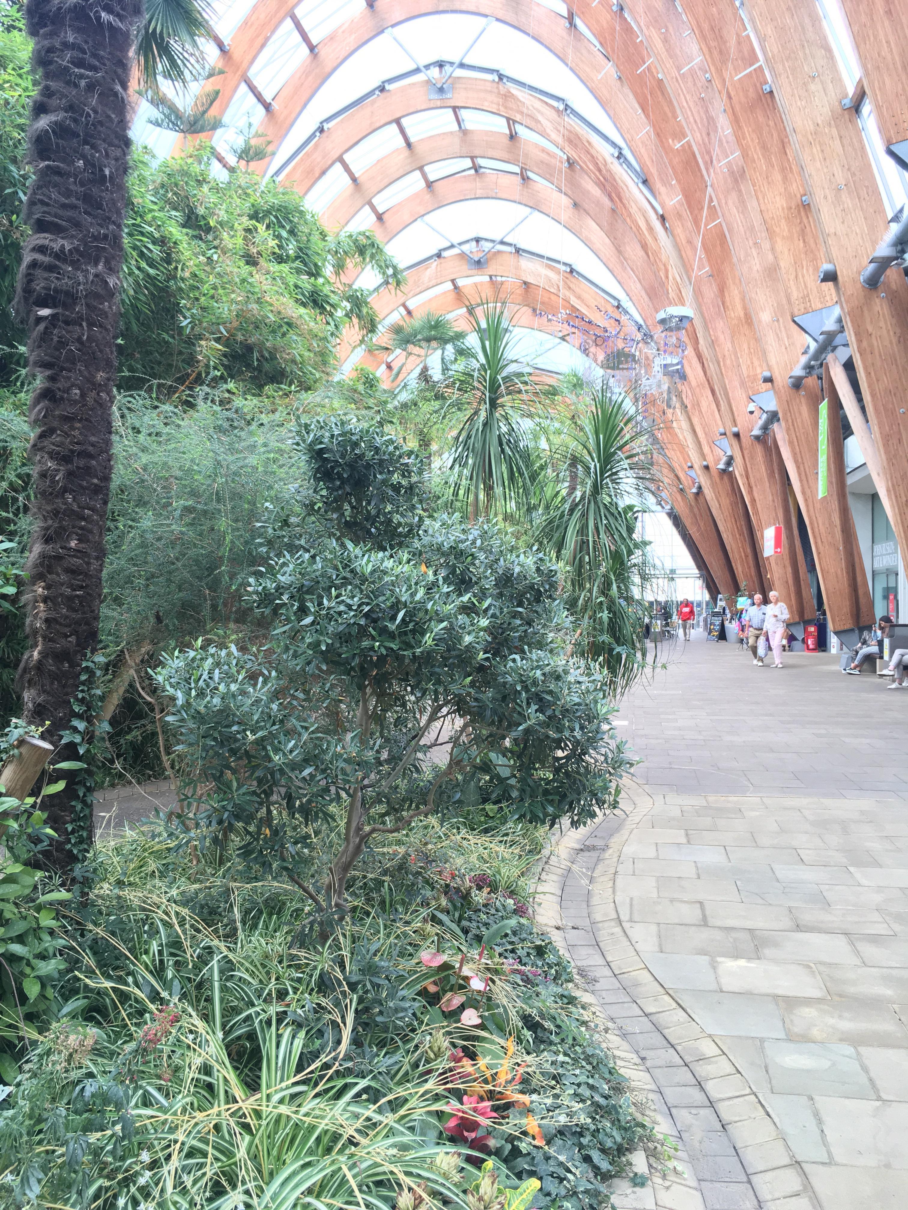 Sheffield, winter gardens, olive, tea tree, Aromatherapy, massage, essential oils, Belper, Derbyshire, gardens
