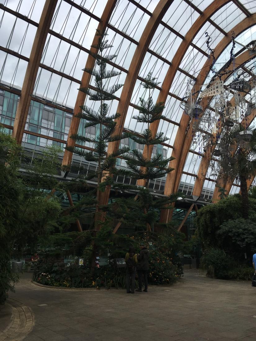Norfolk Island Pines, Sheffield, winter gardens, essential oils, Aromatherapy, massage, Belper, Derbyshire